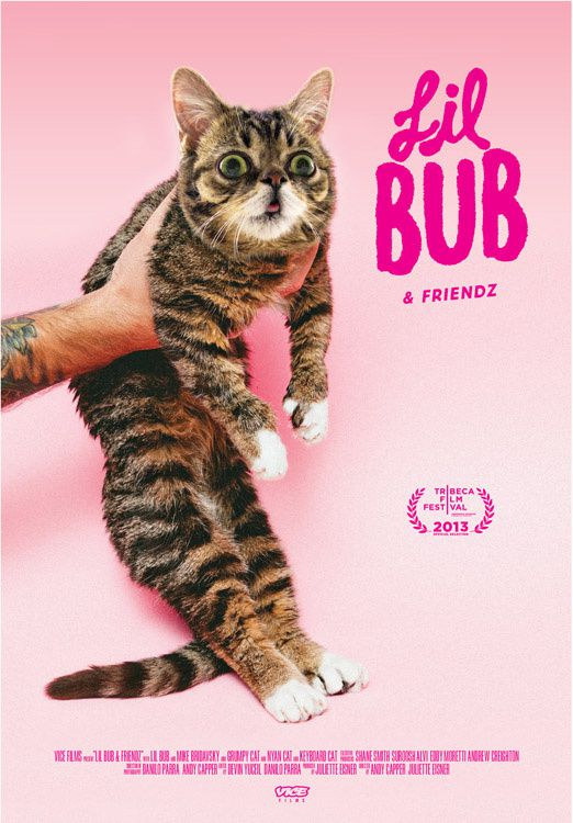 Lil BUB & Friendz - Documentaire (2013) streaming VF gratuit complet